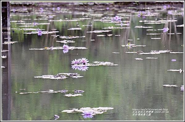 吉安蓮城蓮花園-2020-05-25.jpg