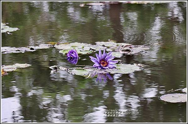 吉安蓮城蓮花園-2020-05-44.jpg