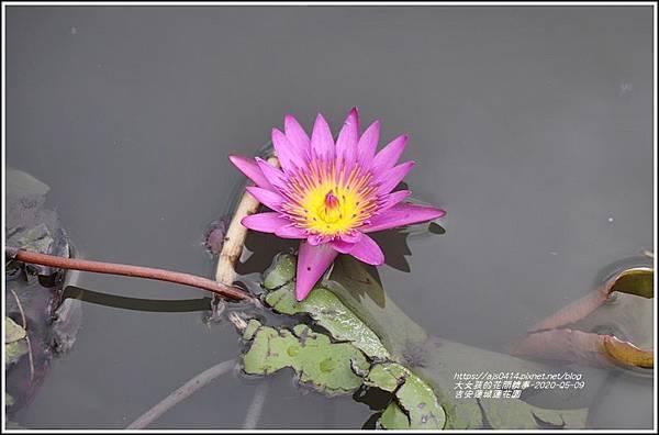 吉安蓮城蓮花園-2020-05-41.jpg