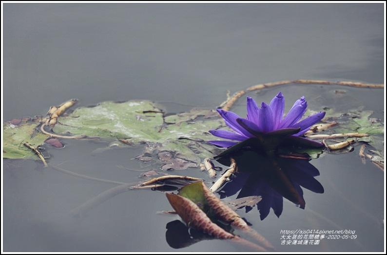 吉安蓮城蓮花園-2020-05-43.jpg