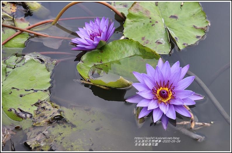 吉安蓮城蓮花園-2020-05-42.jpg