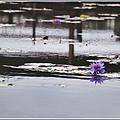 吉安蓮城蓮花園-2020-05-47.jpg