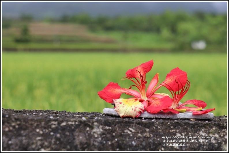 松浦泰林大橋鳳凰木(花蓮193)-2020-05-12.jpg