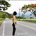 松浦泰林大橋鳳凰木(花蓮193)-2020-06-29.jpg