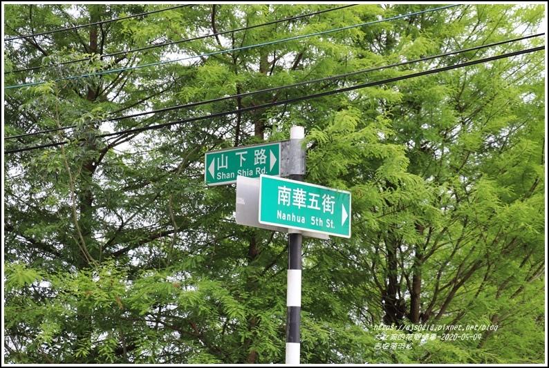 吉安南華落羽松-2020-05-14.jpg