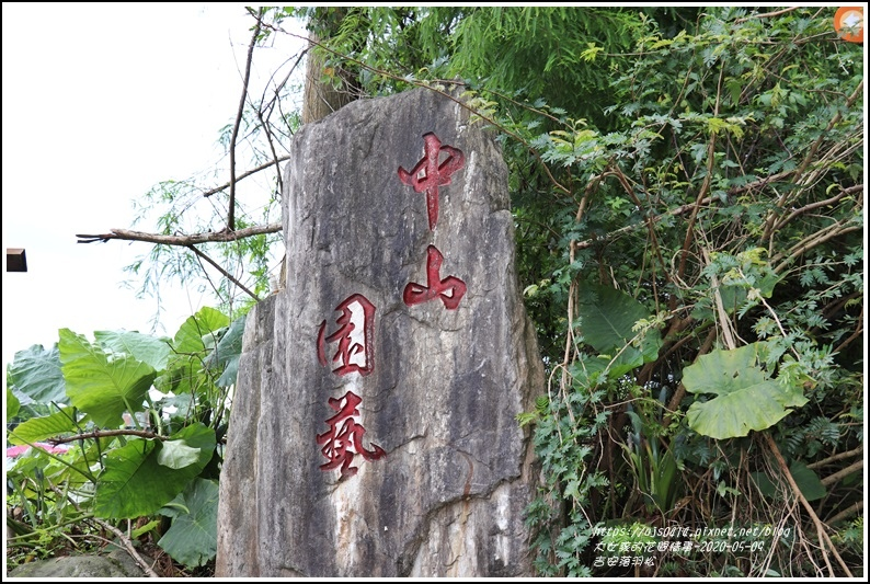 吉安南華落羽松-2020-05-15.jpg