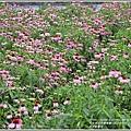 吉安紫錐花-2020-05-03.jpg