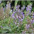 吉安紫錐花-2020-05-02.jpg