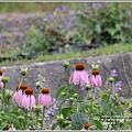 吉安紫錐花-2020-05-05.jpg