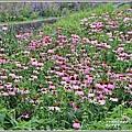 吉安紫錐花-2020-05-07.jpg