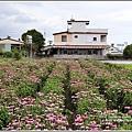 吉安紫錐花-2020-05-06.jpg