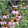 吉安紫錐花-2020-05-10.jpg