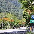 台9線289K(萬寧段)鳳凰木-2020-06-03.jpg
