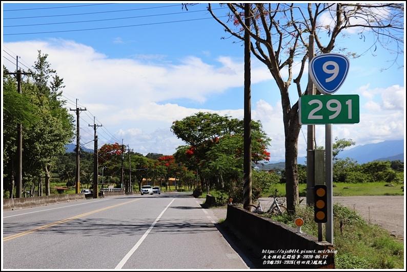 台9線291-292K(竹田段)鳳凰木-2020-06-01.jpg