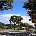 台9線291-292K(竹田段)鳳凰木-2020-06-12.jpg