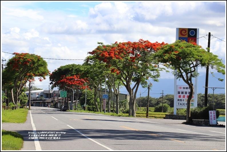 台9線291-292K(竹田段)鳳凰木-2020-06-27.jpg