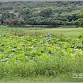 漂鳥197-2020年大地藝術季(大坡池)-2020-06-32.jpg