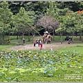 漂鳥197-2020年大地藝術季(大坡池)-2020-06-38.jpg