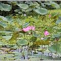 漂鳥197-2020年大地藝術季(大坡池)-2020-06-62.jpg