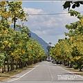 花蓮193阿勃勒(樂德公路)-2020-06-10.jpg