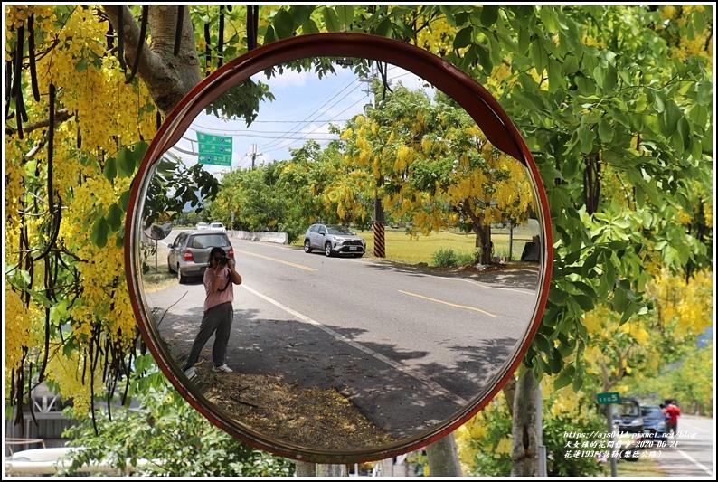 花蓮193阿勃勒(樂德公路)-2020-06-19.jpg