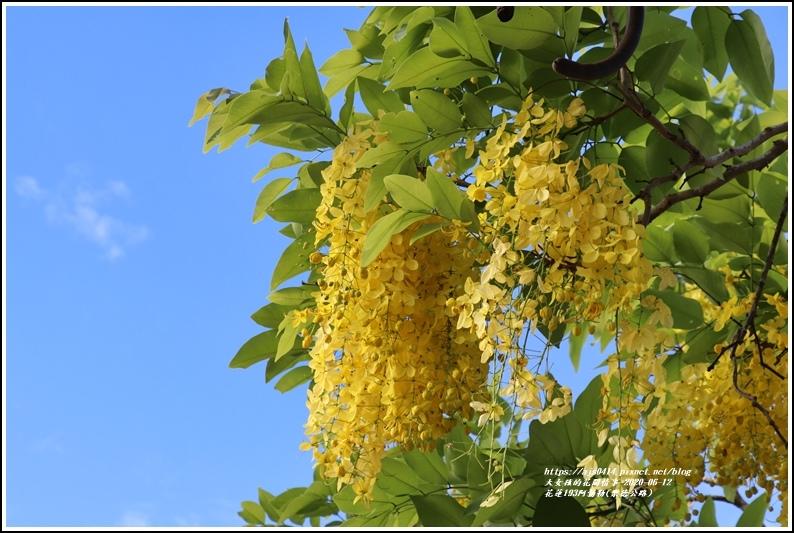 花蓮193阿勃勒(樂德公路)-2020-06-22.jpg