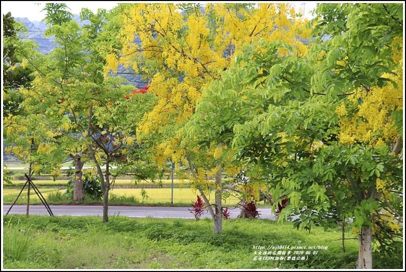 花蓮193阿勃勒(樂德公路)-2020-06-29.jpg
