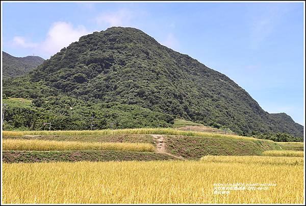 新社梯田-2020-06-13.jpg