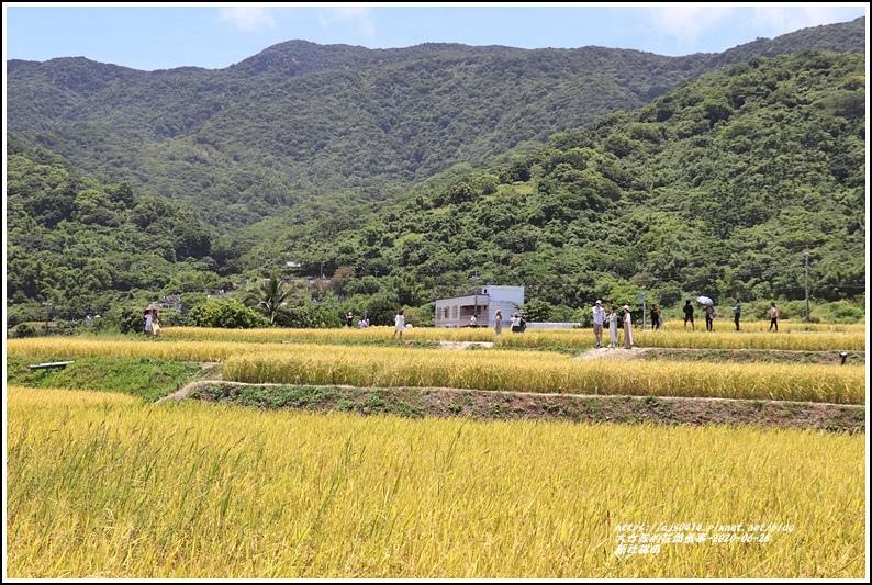 新社梯田-2020-06-12.jpg