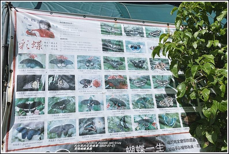 青陽蝴蝶農園-2020-07-03.jpg