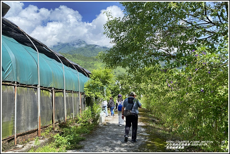青陽蝴蝶農園-2020-07-02.jpg