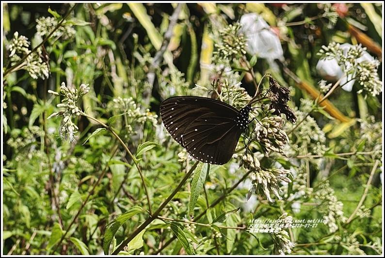 青陽蝴蝶農園-2020-07-12.jpg