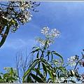 青陽蝴蝶農園-2020-07-20.jpg