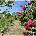 青陽蝴蝶農園-2020-07-24.jpg