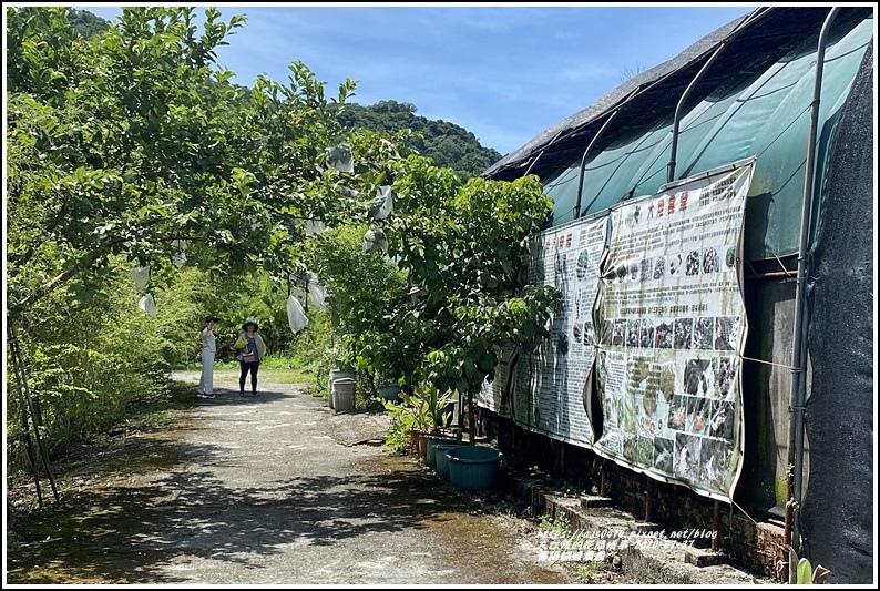 青陽蝴蝶農園-2020-07-26.jpg