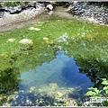 青陽蝴蝶農園-2020-07-30.jpg