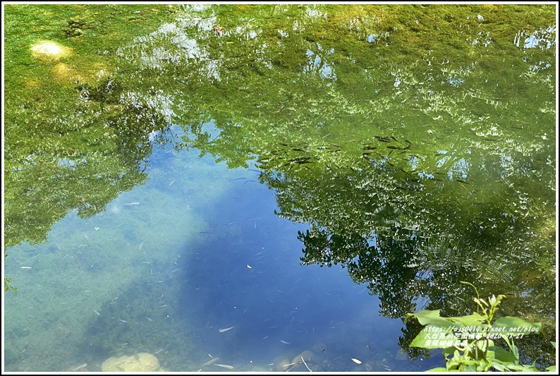 青陽蝴蝶農園-2020-07-29.jpg