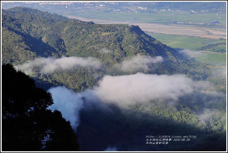 赤柯山金針花季-2020-08-02.jpg