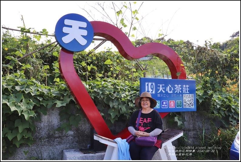 赤柯山金針花海-2020-08-51.jpg