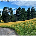 赤柯山小瑞士杉林木-2020-08-01.jpg
