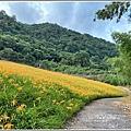 赤柯山小瑞士杉林木-2020-08-02.jpg