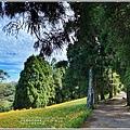 赤柯山小瑞士杉林木-2020-08-05.jpg