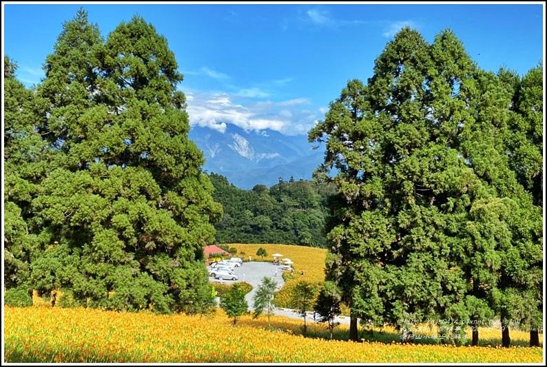赤柯山小瑞士杉林木-2020-08-09.jpg