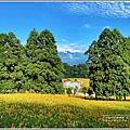 赤柯山小瑞士杉林木-2020-08-08.jpg