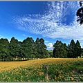 赤柯山小瑞士杉林木-2020-08-06.jpg