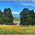赤柯山小瑞士杉林木-2020-08-11.jpg