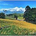 赤柯山小瑞士杉林木-2020-08-12.jpg