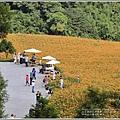 赤柯山小瑞士杉林木-2020-08-14.jpg