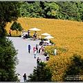 赤柯山小瑞士杉林木-2020-08-15.jpg