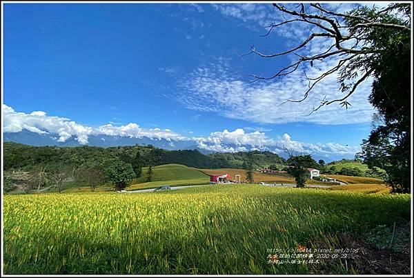 赤柯山小瑞士杉林木-2020-08-17.jpg